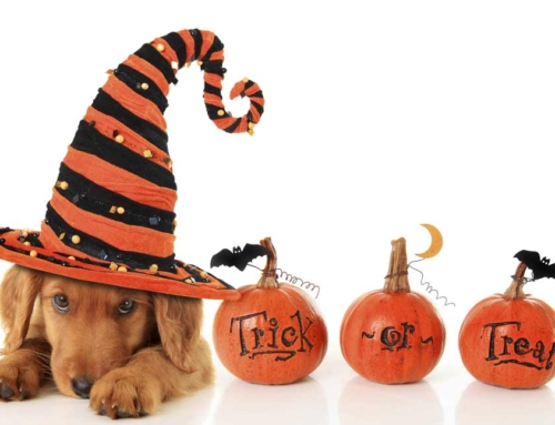 Toxin or treat? Halloween safety for hounds!