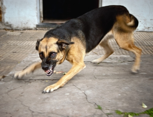 Part Two: Has rabies lost it 'bite'?